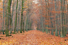 Pathway in the autumn forest. Germany Royalty Free Stock Images