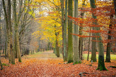 Pathway in the autumn forest Royalty Free Stock Photography