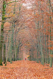 Pathway in the autumn forest. Germany Stock Image