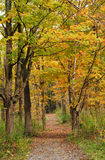 Pathway into an autumn forest Stock Images