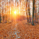 Pathway in the autumn forest Royalty Free Stock Images