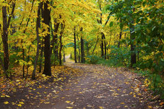 Pathway in autumn forest Royalty Free Stock Image