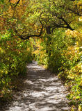 Pathway in autumn forest Stock Image