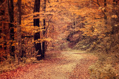 Pathway through the autumn forest Stock Photos