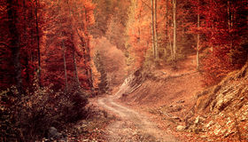 Pathway through the autumn forest. Beautiful natural view Stock Photos