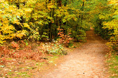 Pathway in the autumn forest. Stock Images