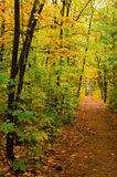 Pathway in the autumn forest. Stock Image
