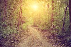 Pathway in the autumn forest Stock Photography