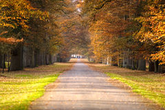 Pathway in the autumn forest Royalty Free Stock Photo