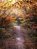 Pathway in the autumn forest illuminated by the sun Royalty Free Stock Photo