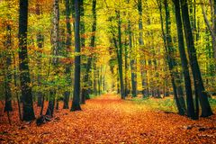Path in autumn forest. Pathway in the autumn forest Royalty Free Stock Photos