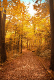 Pathway in the autumn forest. Pathway in the autumn forest path autumn forest bench trees leaves overcast fall Royalty Free Stock Images