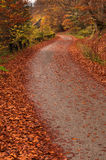 Pathway in the autumn forest Stock Photos