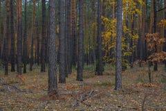 Pathway through the autumn forest stock photo