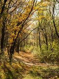 Pathway in the autumn forest Royalty Free Stock Photos