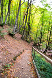 Pathway through the autumn forest Stock Image