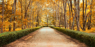 Pathway in autumn Landscape Stock Images