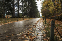 A pathway in the autumn Royalty Free Stock Photo