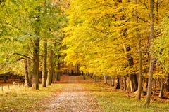 Pathway in the autumn park. Frankfurt Stock Photo
