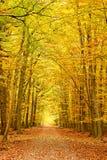 Pathway in the autumn park. Frankfurt Stock Image
