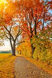 Pathway in the autumn park Royalty Free Stock Images
