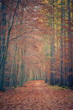 Pathway in autumn park Royalty Free Stock Photo