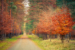 Pathway in autumn park. Natural backgrounds: pathway in autumn park Stock Image