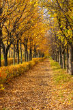 Pathway through the autumn park Royalty Free Stock Photo
