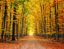 Pathway in autumn park. Pathway in the bright autumn park Stock Photo