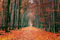 Pathway in autumn park. Pathway in the bright autumn park Royalty Free Stock Image