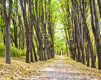 Pathway through the autumn park Royalty Free Stock Photography