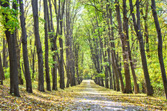 Pathway through the autumn park Royalty Free Stock Photos