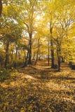 Pathway in autumn park Stock Photo