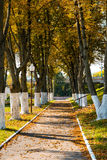 Pathway in the autumn park Royalty Free Stock Image