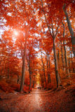 Pathway through the autumn park unde sunlight.  Royalty Free Stock Photography