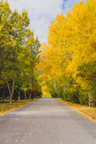 Pathway in Autumn Royalty Free Stock Photos