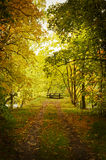 Pathway in autumn. Texture conceptual images Stock Photography