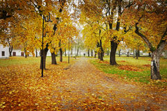 Pathway in autumn. Texture conceptual images Royalty Free Stock Photos