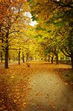 Pathway in autumn. Texture conceptual images Stock Image