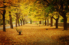 Pathway in autumn. Texture conceptual images Royalty Free Stock Image