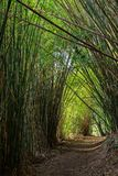 Pathway in bamboo forest Stock Photo