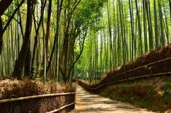 Pathway through bamboo grove, Kyoto Japan. Royalty Free Stock Photography