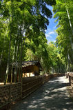 Pathway through the bamboo grove of Kyoto Japan. The picture of pathway through bamboo grove and ruined hut in Kyoto Japan Stock Photos