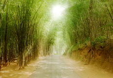 Pathway in bamboo tree. Sunshine on top of  pathway with bamboo tree pattern on sideway in the park Stock Photography