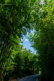 Pathway through bamboo woods, Kyoto Japan royalty free stock photo