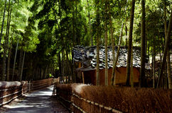 Pathway through bamboo woods, Kyoto Japan Royalty Free Stock Photos