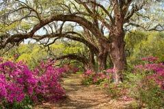 Pathway through beautiful blooming park. Stock Photos