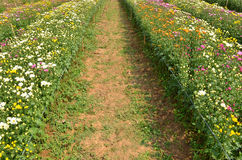 Pathway in beautiful spring flowers Stock Images