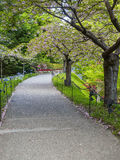 Pathway in a blossoming garden Royalty Free Stock Photos