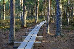 Pathway in the bogs Royalty Free Stock Photos
